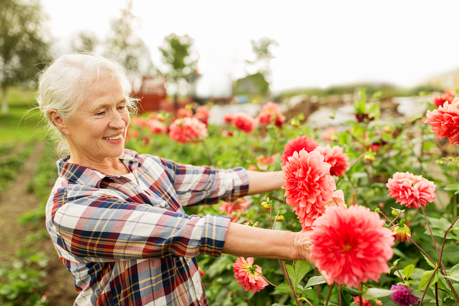 Looking after your garden in spring red deer village for Gardening tips colorado